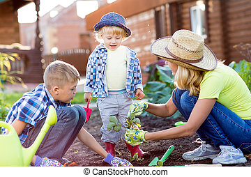 Kids with mother planting strawberry seedling into soil outside in garden