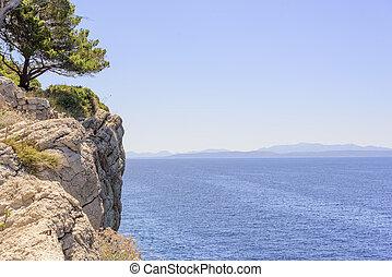 kiefer, auf, der, ufer, von, der, blaues, sea., croatia.