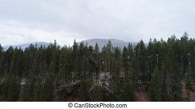 kiefer bäume, zugewandt, der, gebirgszüge, 4k