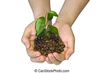 kiemplant, handen