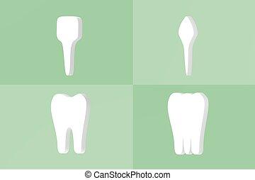 kies, -, tand, premolar, canine, incisor, type