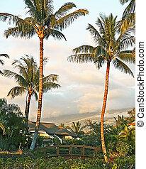 kihei, localizado, condo, hawai, recurso