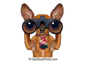 kikare, hund, hålla ögonen på