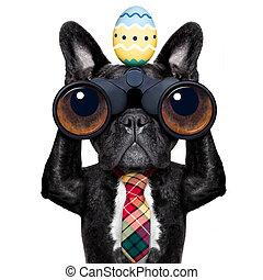 kikare, påsk, hund, hålla ögonen på