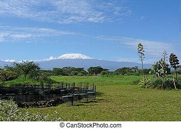 kilimanjaro, 中に, kenya