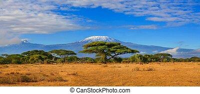 kilimanjaro, 山, タンザニア, kenya, 旅行, アフリカ