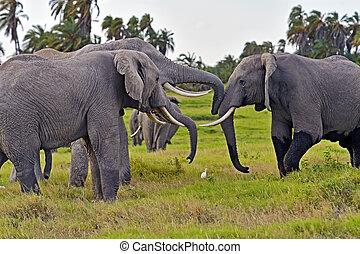 kilimanjaro, 象