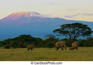 kilimanjaro, elefantes