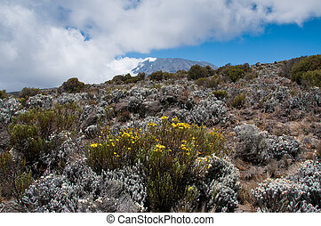 Kilimanjaro from lower slopes - Descending from summit the ...