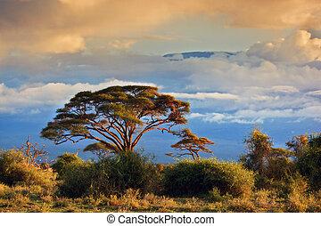 kilimanjaro., monte, amboseli, savanna, kenya
