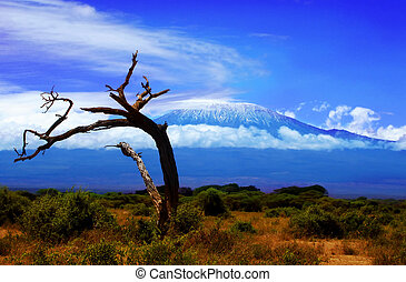 Kilimanjaro Tree - An image of Kilimanjaro with a dead tree.