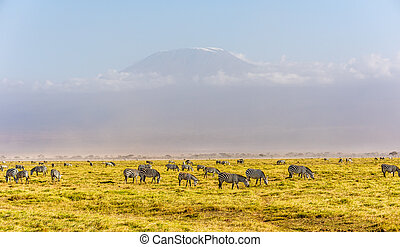 Kilimanjaro with snow cap and zebras seen from Amboseli ...