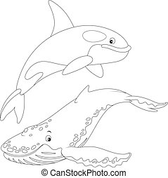 killer whale and hunchbacked whale - shamoo and hump-backed...