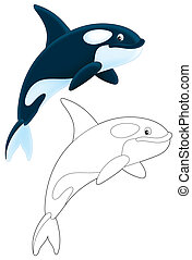 Killer whale - Orca diving, color illustration and black and...