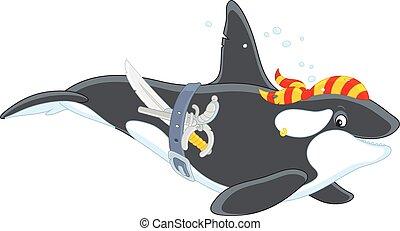 Killer whale pirate