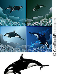 Killer whale set - Set of killer whales including five...