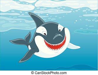 Killer whale swimming in a polar sea