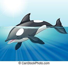 Killer whale swimming in the sea