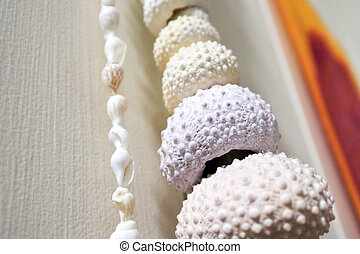 Kina sea animal shell collection hanged on a wall background...