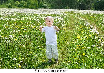 kind, de, jongen, toneelstukken, op, een, groene weide, met, paardebloemen