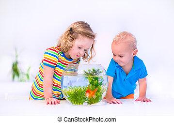 kinder, aufpassen, fisch- schüssel