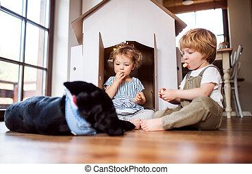 kinder, hund, zwei, innen, kleinkind, home., spielende