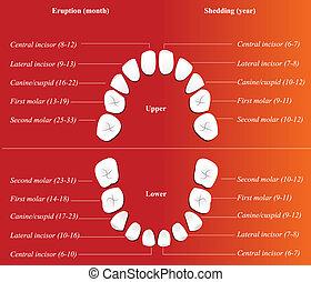 kinderen, dentaal, chart.