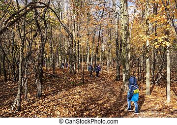 Kindergarten on a walk in the autumn grove
