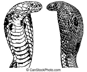King Cobra Set