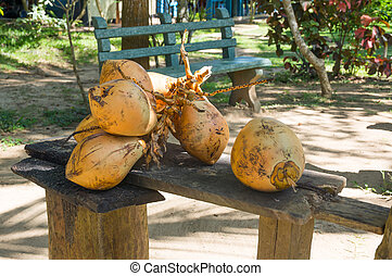 King coconuts collected in Tangalle garden, Tangalle, ...