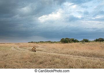 King Male Lion Portrait in Masai Ma