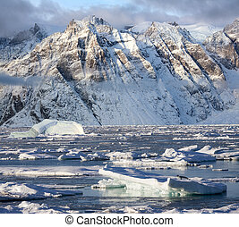 King Oscars Fjord - Greenland - Hooded seal on sea ice and...