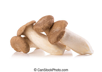 King Oyster mushroom (Eringi) on white backgroud.