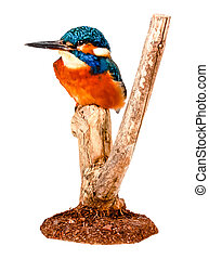 a Beautiful picture of a colorful kingfisher