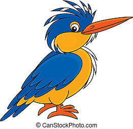 Kingfisher - halcyon, on a white background