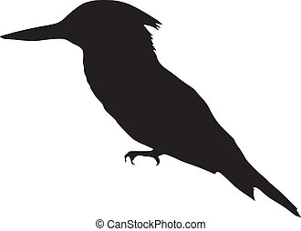 kingfisher - silhouette of kingfisher