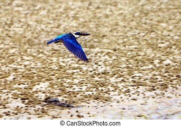 kingfisher., martín pescador, bosque, medium-sized,...