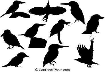 Kingfisher Silhouette vector illustration
