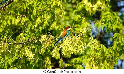 kingfisher sitting on a tree with prey