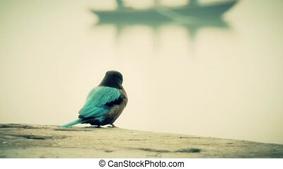 kingfisher surveying the Ganges - Kingfishers are a group of...