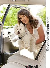 kinyerés, kutya, bele, egy, autó