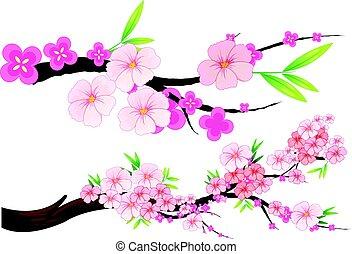 kirsch blüte, blumen, auf, zweige