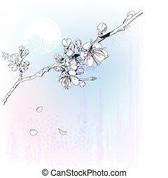 kirschblüten, in, volle blüte