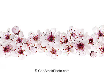 kirschen, umrandungen, blüten