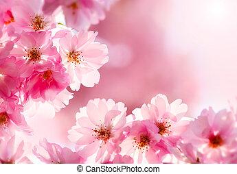 kirsebær blomstr