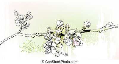 kirsebær, fuld blomstring, blomstre