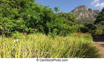 Kirstenbosch botanical gardens - Ca - View of the...