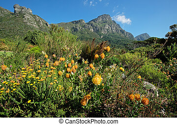 Kirstenbosch botanical gardens against the backdrop of Table...