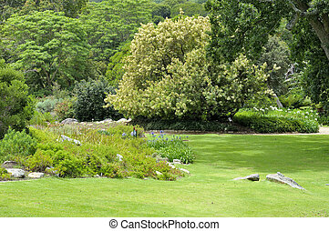 kirstenbosch, nemzeti, botanical kert
