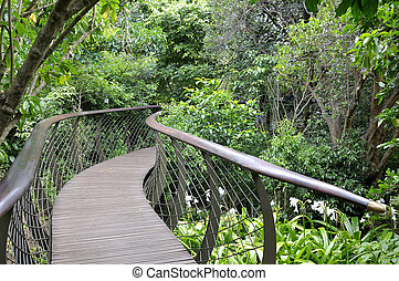 Kirstenbosch Tree Canopy Walkway, the Boomslang -...